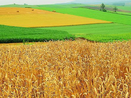 Категории и виды разрешенного использования земель