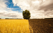 Фонд перераспределения земель