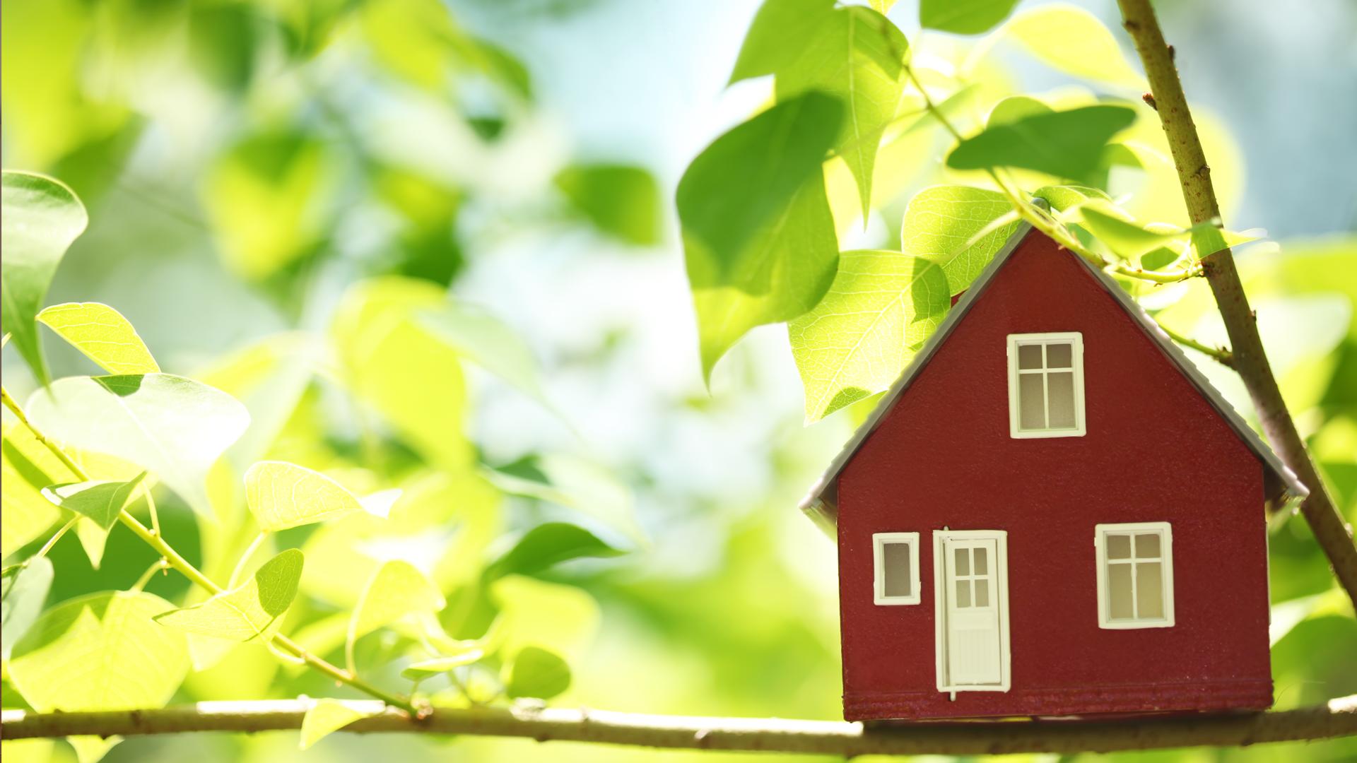 Дом и листья