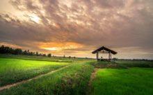 Строительство на землях сельскохозяйственного назначения в 2020 году