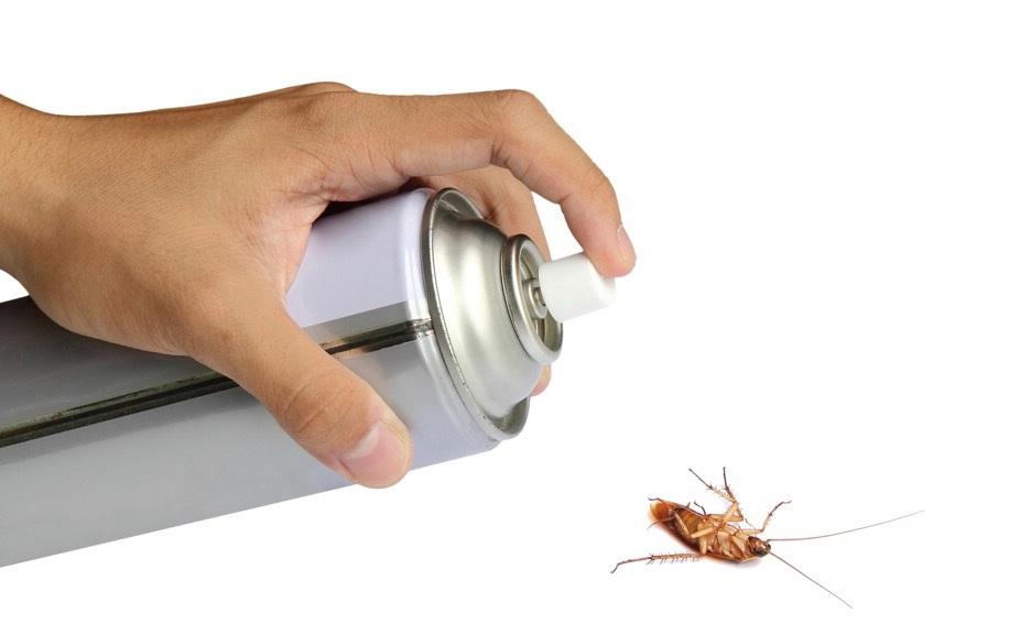 как избавиться от тараканов в квартире раз и навсегда самостоятельно в домашних условиях